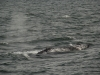 20131231_whalewatching_1318
