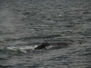 20131231_whalewatching_1319