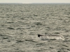 20131231_whalewatching_1335