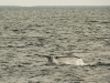 20131231_whalewatching_1336