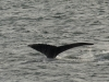 20131231_whalewatching_1338