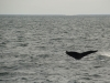 20131231_whalewatching_1339