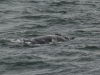 20131231_whalewatching_1376