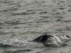 20131231_whalewatching_1403
