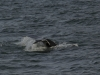 20131231_whalewatching_1427