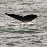 Whale Watching – Virginia Beach – Dec 2013